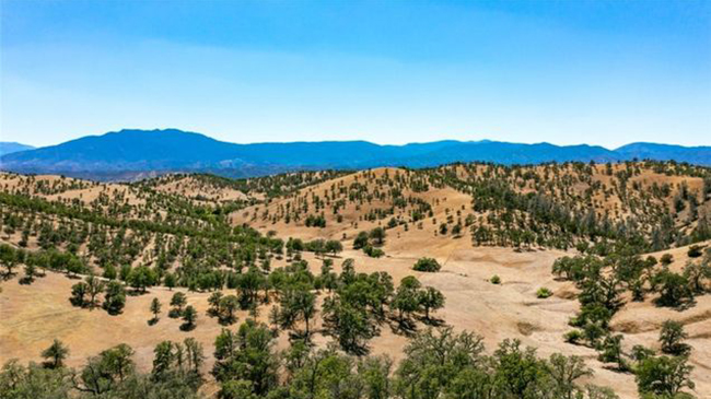 Online Auction: Vacant Land In Tehama County, CA
